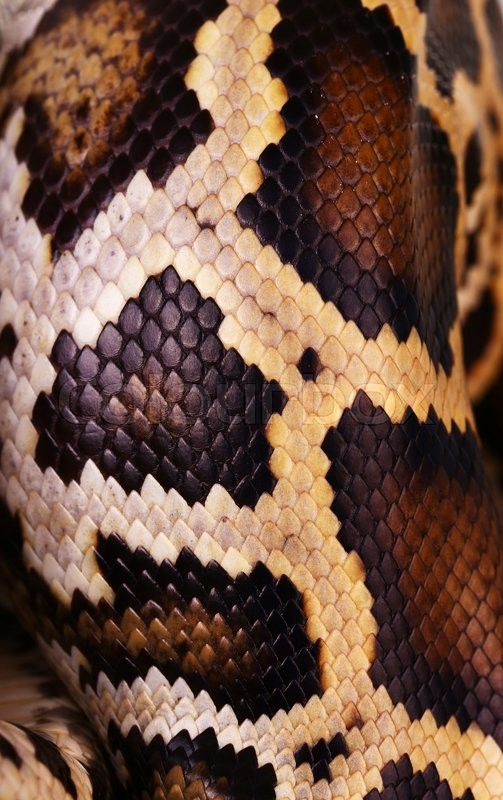 Python Snake Skin And Scales Pattern Stock Photo