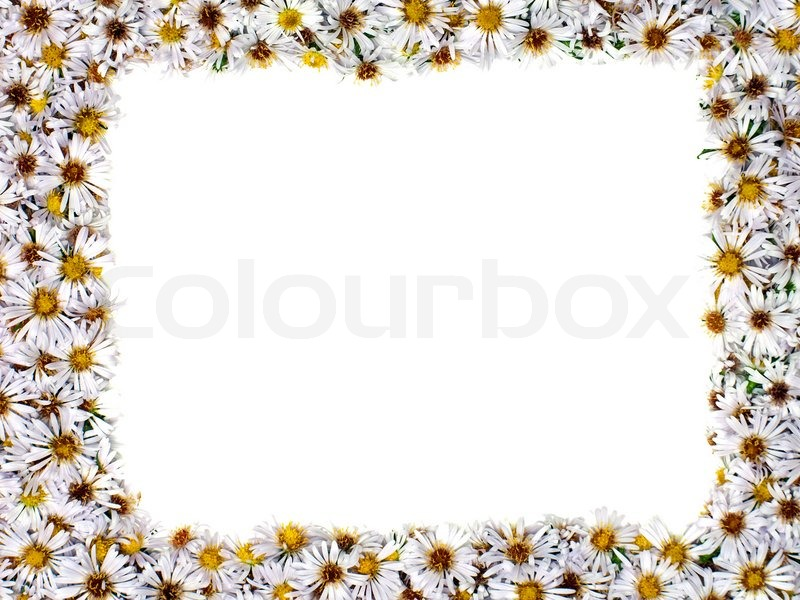 White nature chamomile flower background frame | Stock Photo | Colourbox