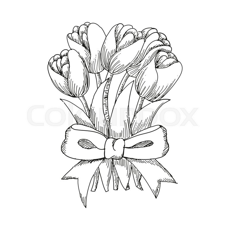 Hand Drawn Bouquet Of Tulips Tied Up By A Ribbon Cute Doodling Flowers Sketch Vector Illustration