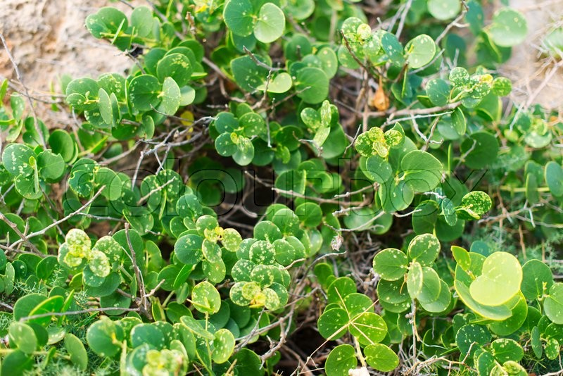 Green plants on the rocks outdoor, stock photo