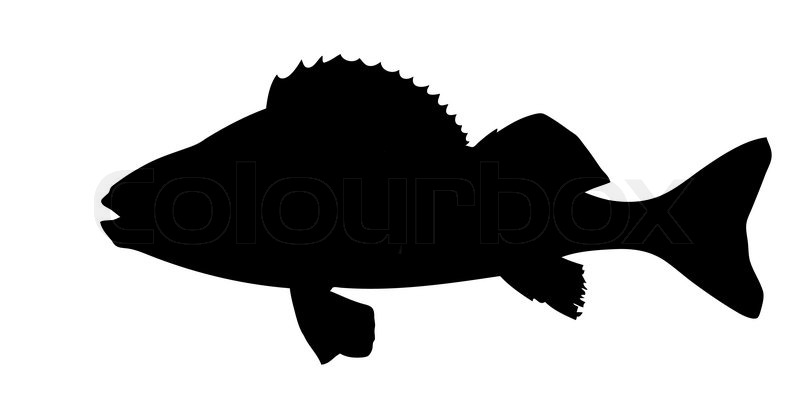 vector silhouette of fish on white background stock vector colourbox rh colourbox com fish silhouette vector free