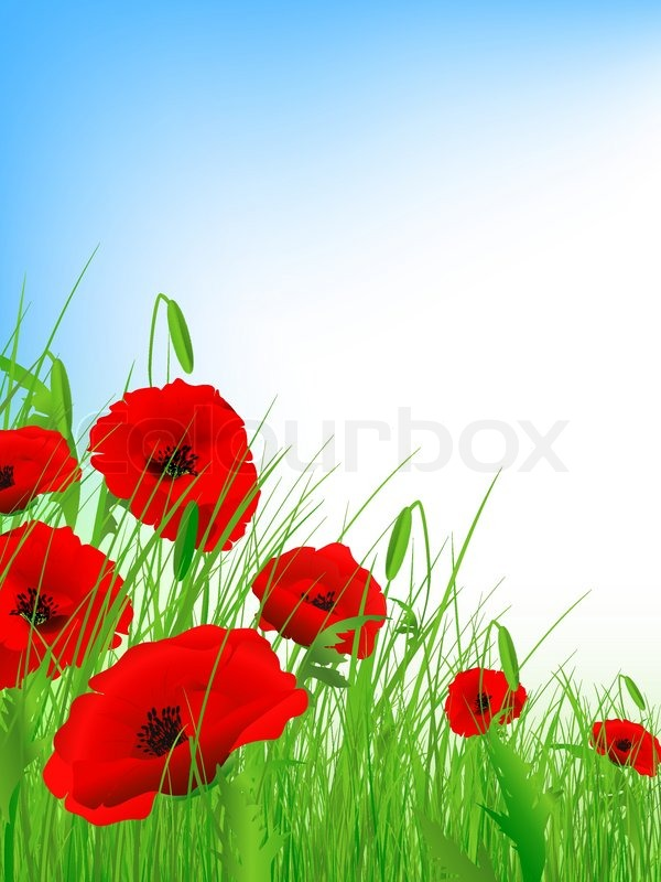 Poppy field with clear blue sky and     | Stock vector | Colourbox
