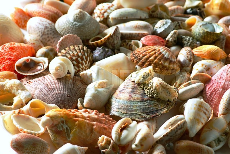 sea shells and pebble beach collection background stock