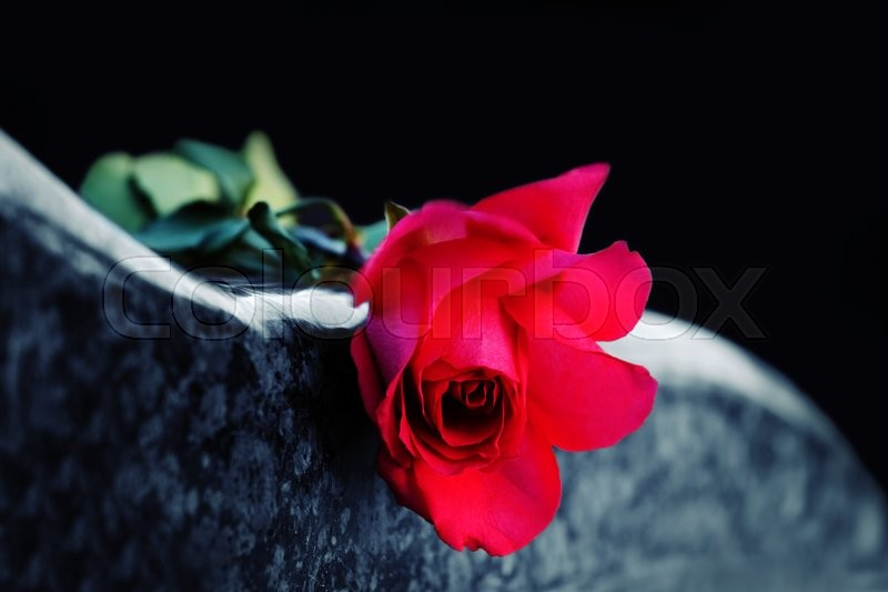 Red rose on the tombstone, stock photo