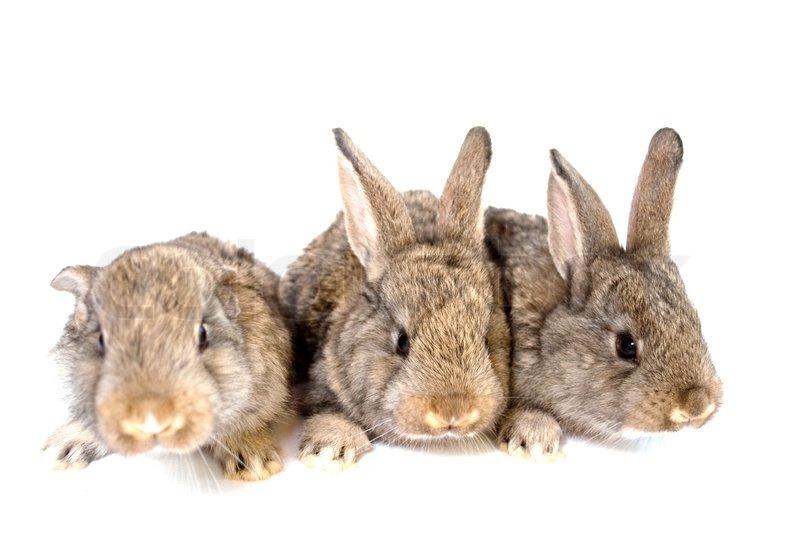 Små grå kaniner på en hvid baggrund | Stock foto | Colourbox