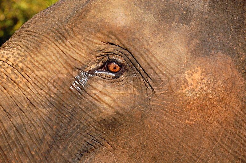 Baby elephant eyes