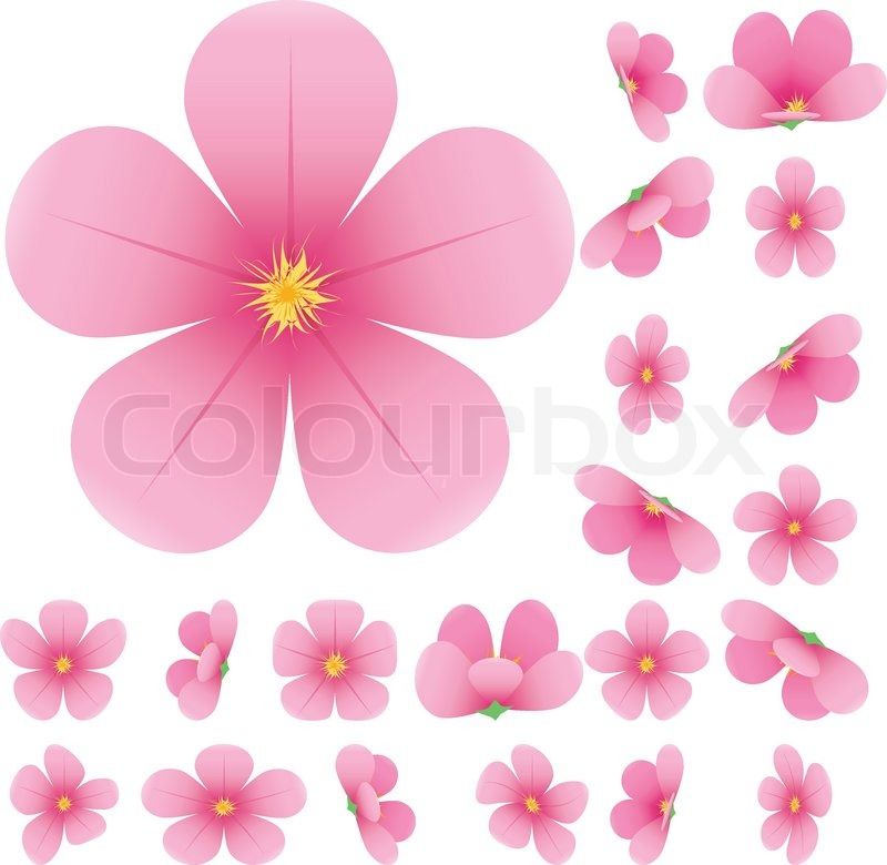 Cherry blossom flowers of sakura set pink flowers collection stock vector of cherry blossom flowers of sakura set pink flowers mightylinksfo