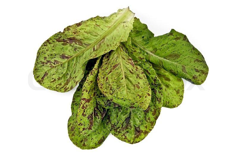 Grün Mit Lila Flecken Haufen Salat Auf Stock Bild Colourbox