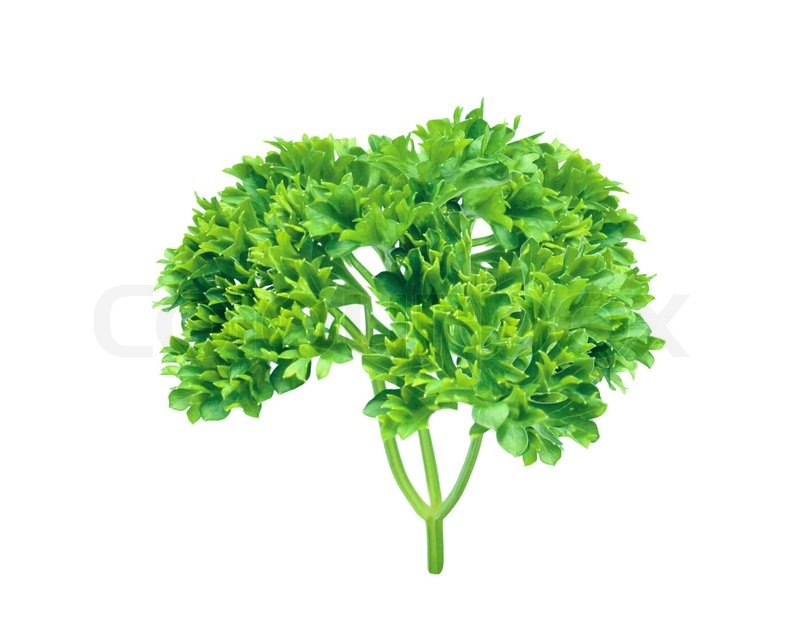 Fresh herbs parsley isolated on white | Stock Photo ...