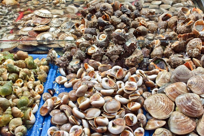 Fresh assorted shells at wholesale seafood market stock for Wholesale fish market