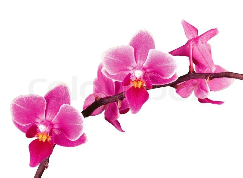 prostituierte film blühende orchidee