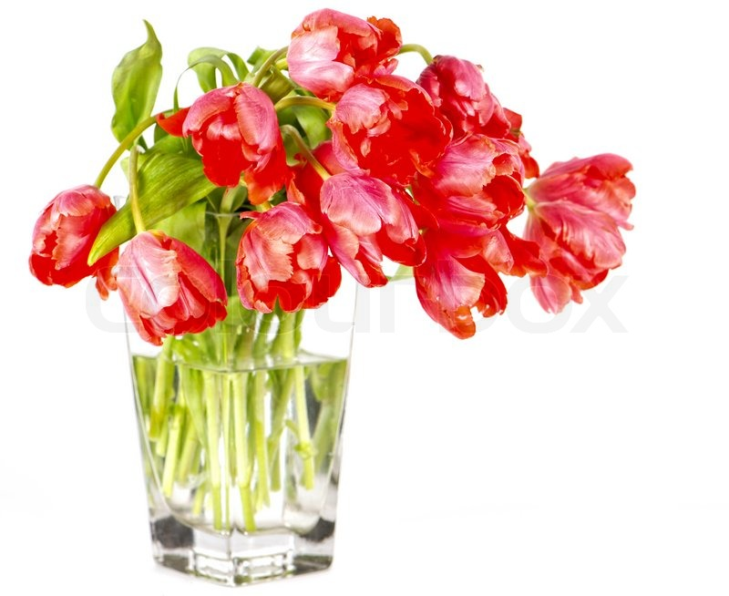 Red Tulip Flowers In A Glass Vase Stock Photo Colourbox