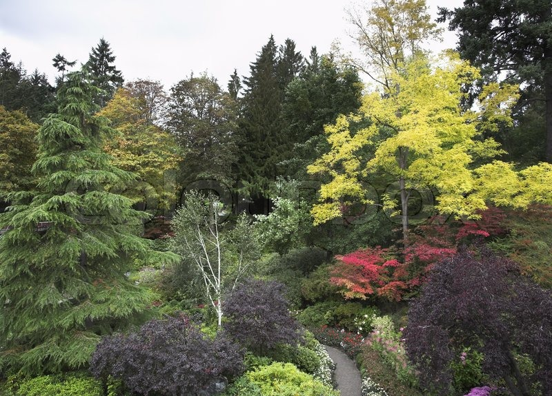 Farverige blomstrende træer og buske i den velkendte park på øen Vancouver | stock foto | Colourbox