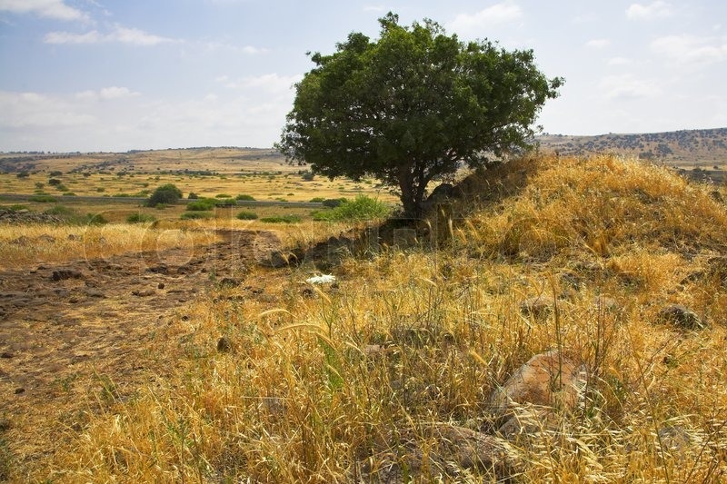 dry grass field background. Hills And Fields With A Yellow Dry Grass Tree On Background Of The Pale Cloudy Sky, Stock Photo Field E