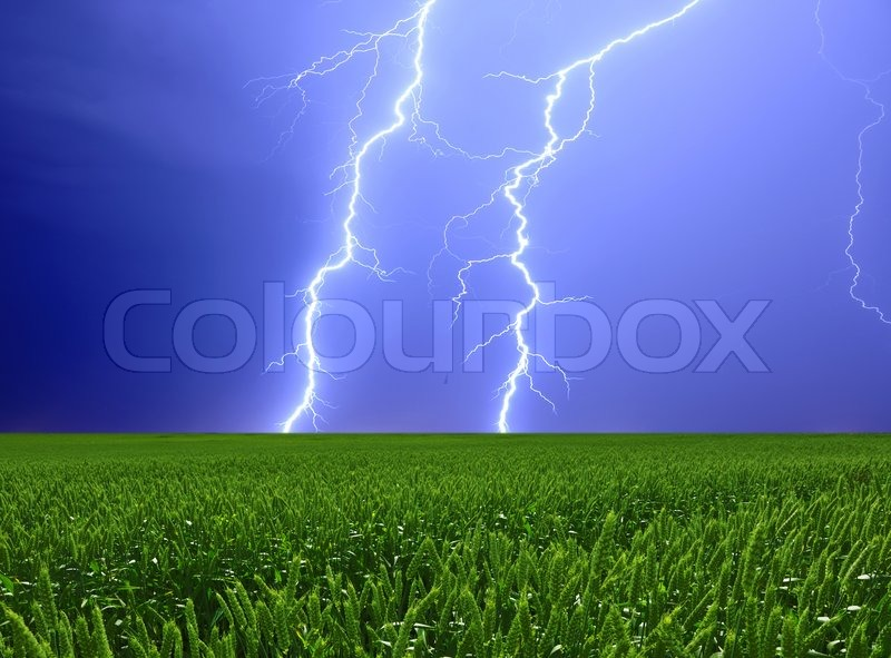 Thunderstorm and perfect Lightning over field of green wheat, stock photo