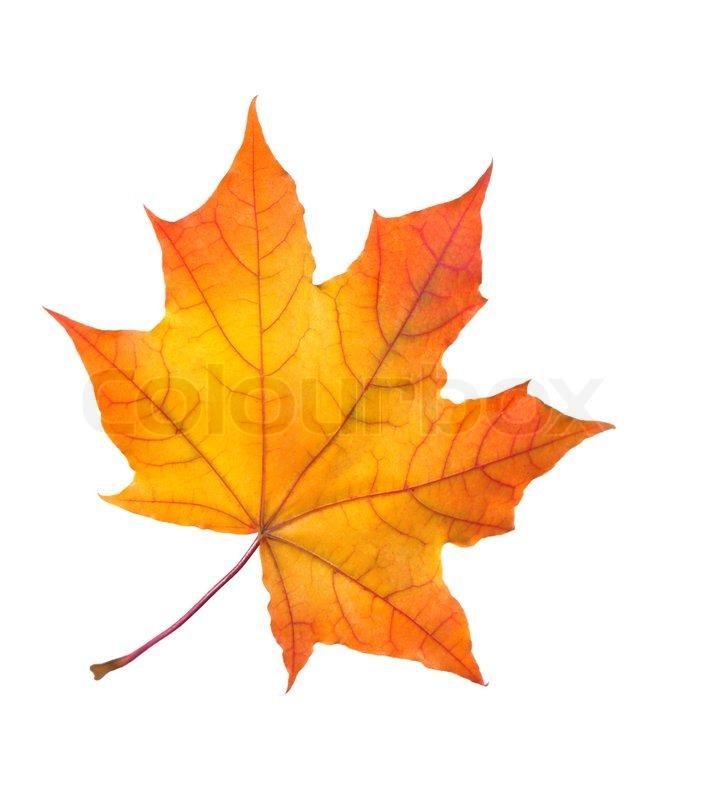 the fall of freddie the leaf pdf