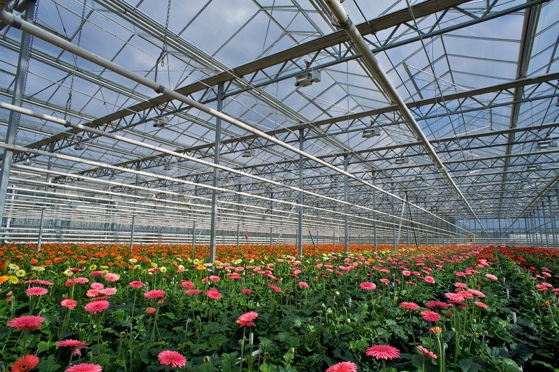Flower Cultivation In Greenhouses A Stock Photo Colourbox