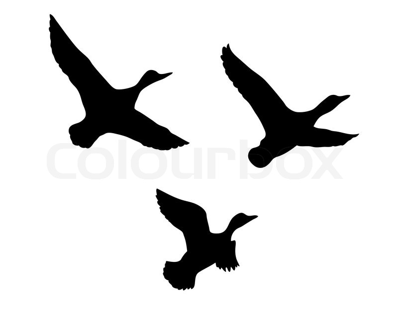 vector silhouette flying duck on white background stock vector colourbox