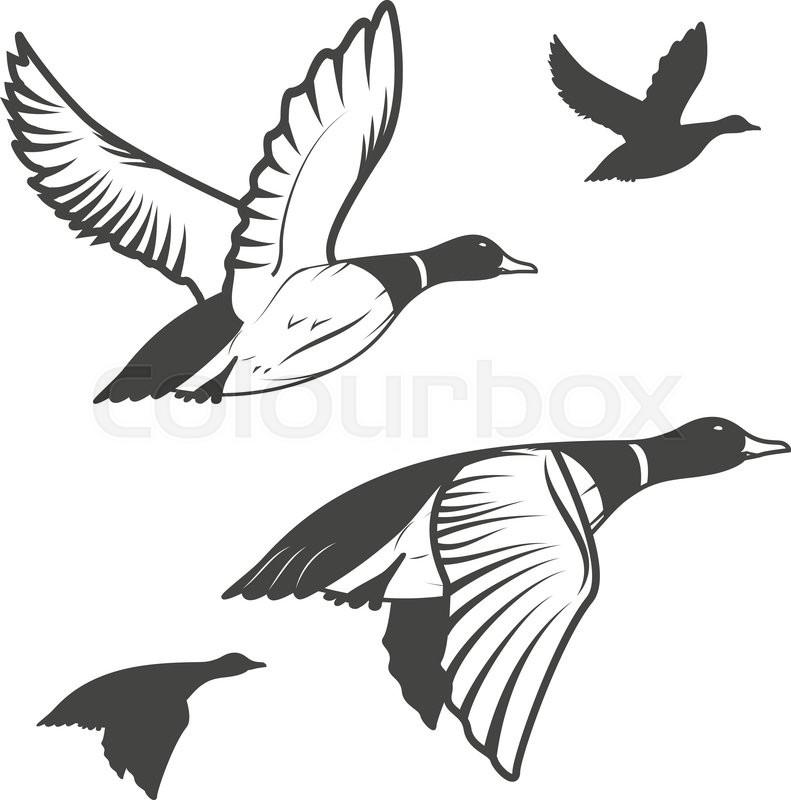 set of flying wild ducks duck hunting mallard duck flying vector illustration vector