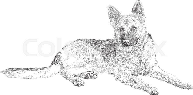 German Shepherd Dog Sketch Drawing Vector Illustration Stock - German-shepherd-drawings