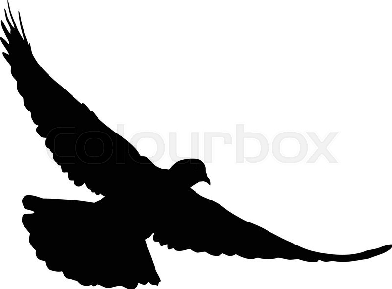 Dove Silhouette : Flying dove silhouettes isolated pigeons vector.