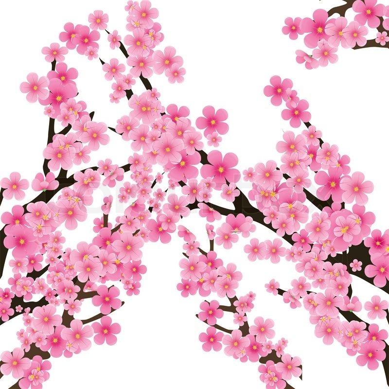 Cherry Blossom Flowers Of Sakura Stock Vector Colourbox