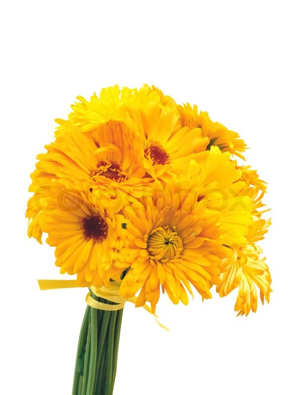 Beautiful bouquet of yellow chrysanthemum flowers isolated ...