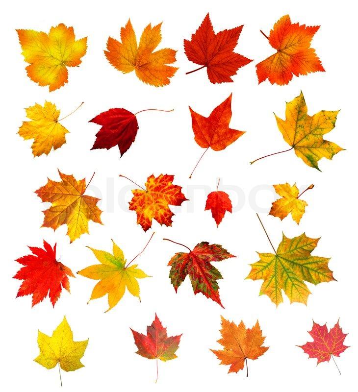 Sammlung schöne bunte Blätter im Herbst auf weißem Hintergrund ...