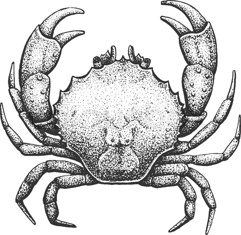 Crab - Classic Drawn Ink Illustration Isolated on White Background ...