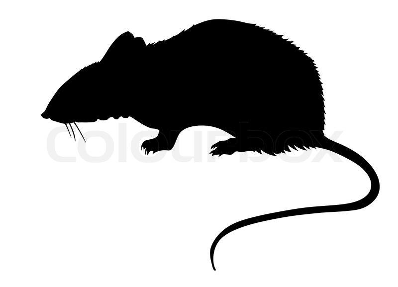 silhouette of the rat on white background stock vector Fruit Bat Outline Clip Art Cute Bat Outline Clip Art