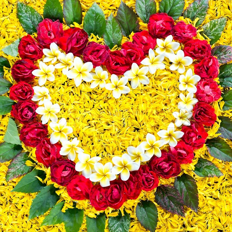 love of gardening, spring leaves and flower heart  stock photo, Beautiful flower