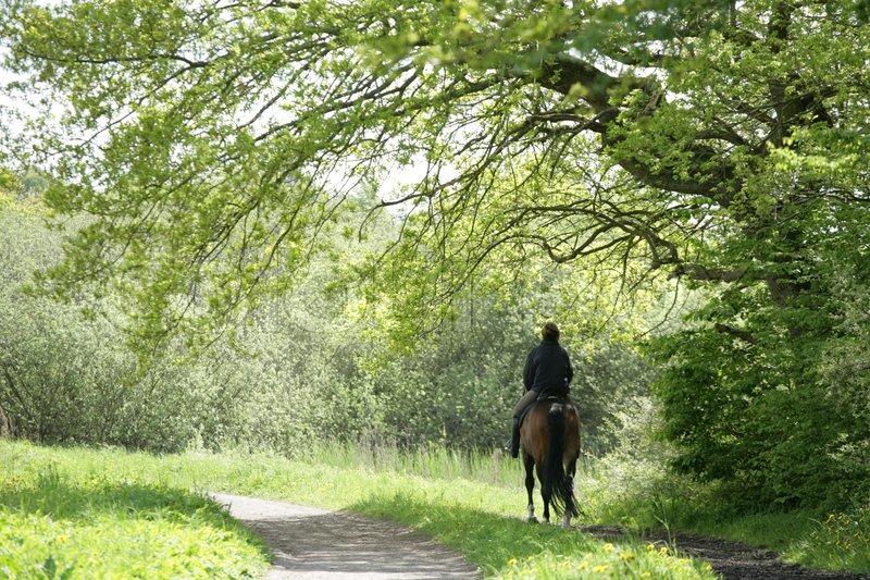 Stock foto af ride danske heste i en skov i foråret