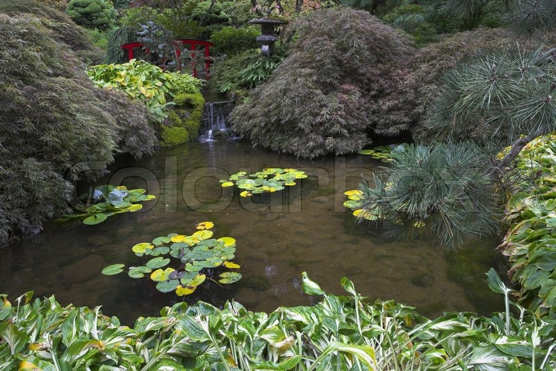 A shallow charming pond with lilies in japanese garden of for Shallow garden pond