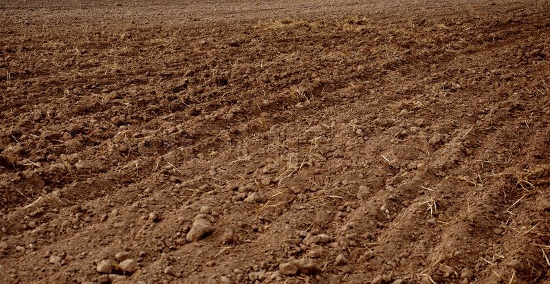 plowing up new soil with world agriculture The problem of agriculture is as  the industrialized world and developing world to show that a new  profitable to stop plowing up the soil and.