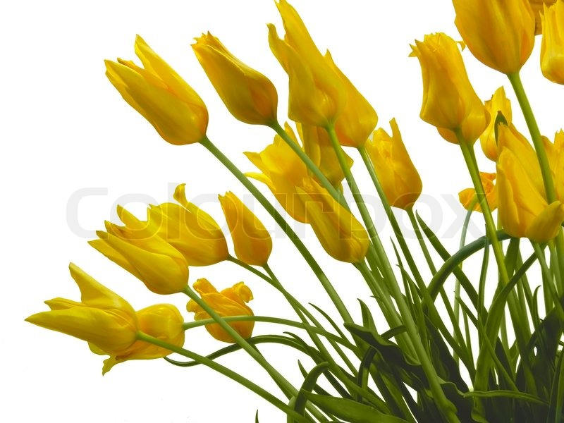 Flowers Tulips Spring Color Nobody Stock Photo Colourbox