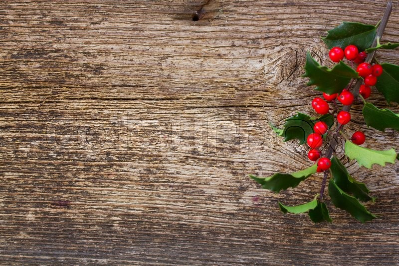 Holly Branch With Fresh Green Leaves And Red Berries On