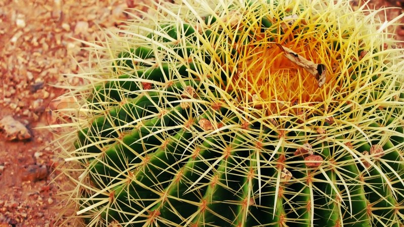 gr n sommer kaktus mit gelben stacheln flora stockfoto colourbox. Black Bedroom Furniture Sets. Home Design Ideas