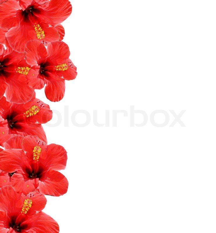 Schöne Blumen Hintergrund, Rahmen mit Platz für Ihren Text ...