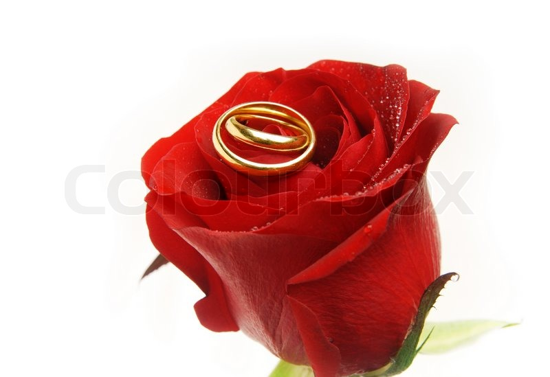 Wedding Rings On The Rose Bud As A Symbol Of Love Stock Photo