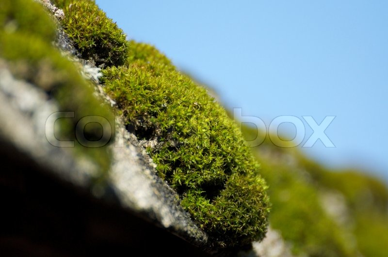 how to get rid of moss growing on your roof