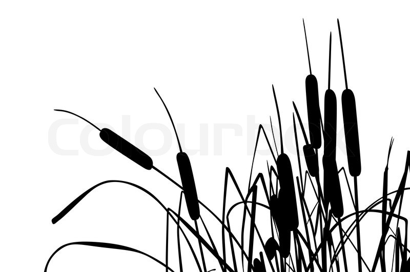 vector illustration of grass like cattails over white stock vector rh colourbox com