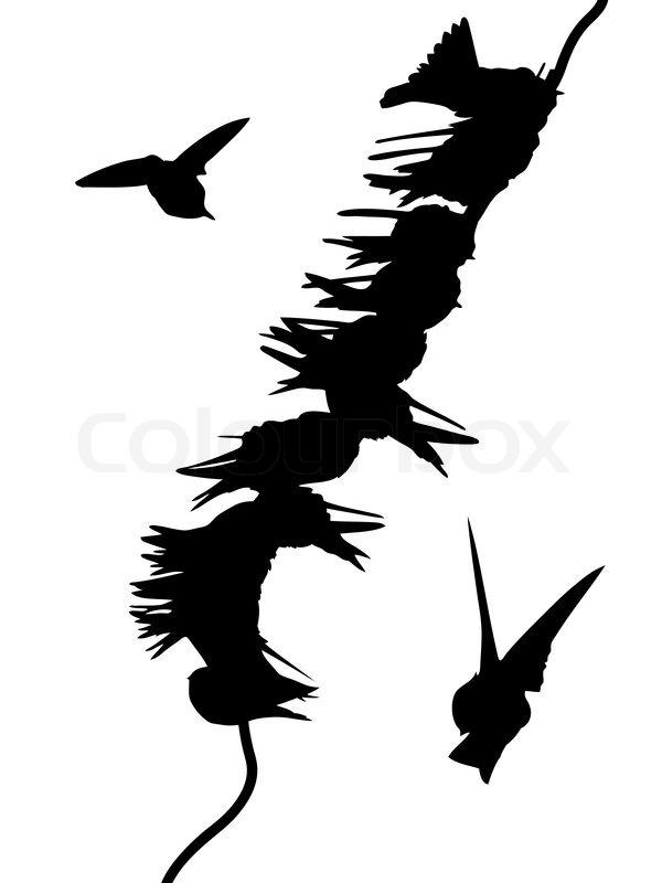 Vektor- Silhouetten der Vögel auf Draht   Vektorgrafik   Colourbox