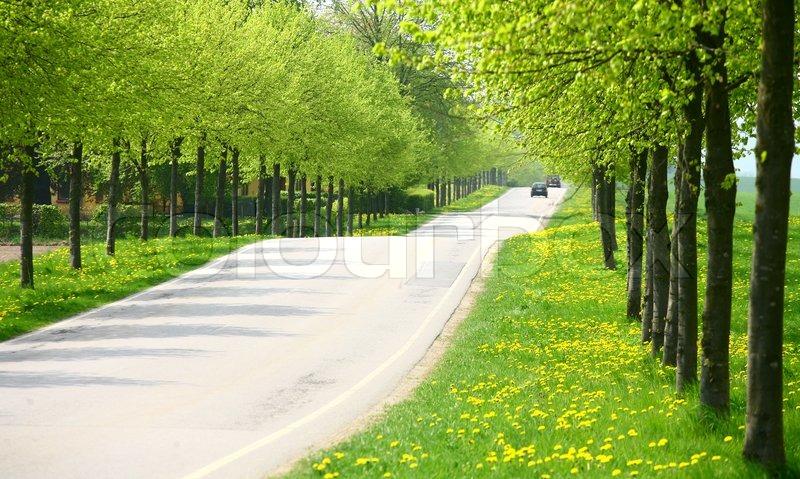 Stock foto af grønt forår landskab med grønne træer i det danske
