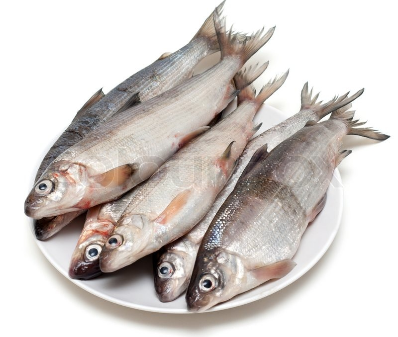 fresh fish whitefish on plate on white background stock photo colourbox. Black Bedroom Furniture Sets. Home Design Ideas