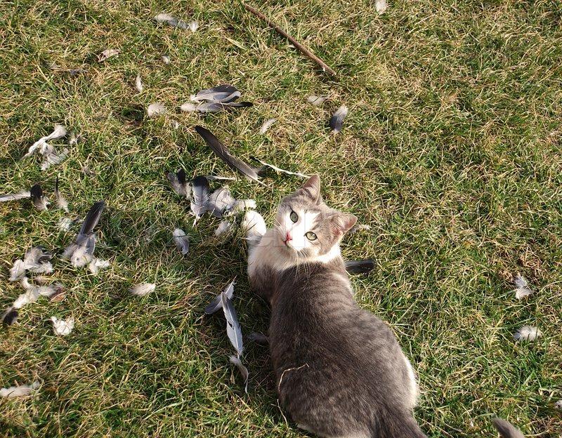 katt bland duvor