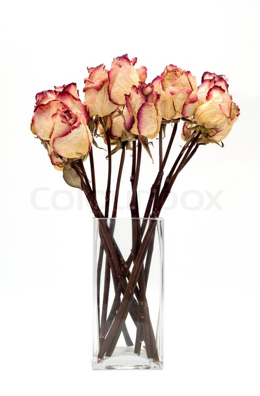 Bouquet of dried roses on a white background | Stock Photo | Colourbox