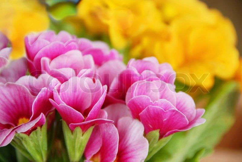 pink and yellow spring flowers natural background stock