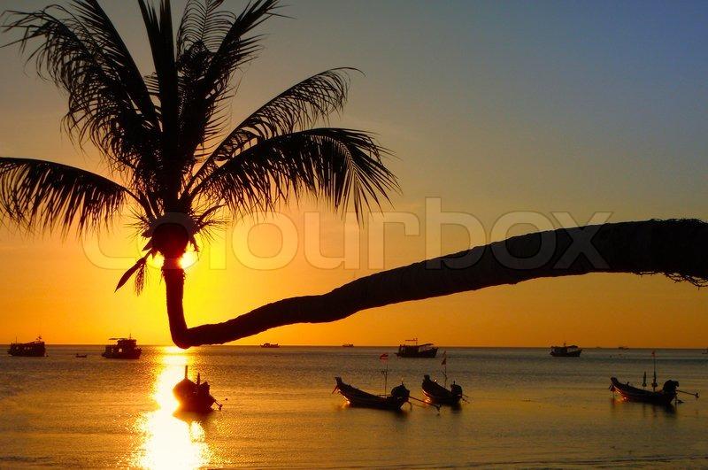 2017 Strand Sonnenuntergang Palmen