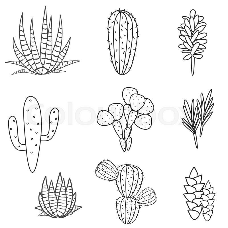 Kleurplaat Cactussen Succulents Cacti Plant Vector Set Stock Vector