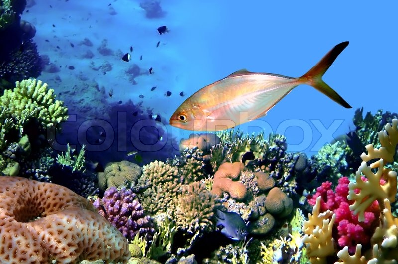 how to use red sea reef energy